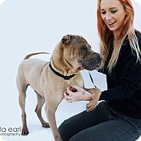 Adopt A Pet :: Ace - pending - Mira Loma, CA