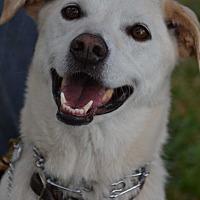 Adopt A Pet :: Casey - Altadena, CA