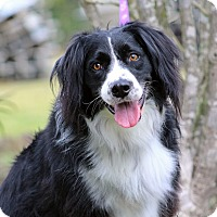 Adopt A Pet :: Higgins - SOUTHINGTON, CT