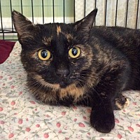 Adopt A Pet :: Morgan - Breinigsville, PA