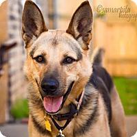 Adopt A Pet :: London - Dallas, TX