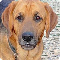 Adopt A Pet :: Lukas handsome boy - Sacramento, CA