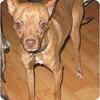 Adopt A Pet :: George - Golden Valley, AZ