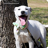 Adopt A Pet :: Claire - Albany, NY
