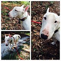 Adopt A Pet :: Noah - Columbia, SC