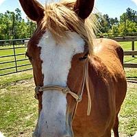 Adopt A Pet :: Scarlet - Cantonment, FL
