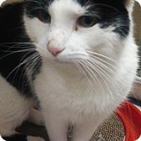 Adopt A Pet :: Teddy - Fairfield, CT