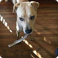 Adopt A Pet :: MARCO - Orlando, FL