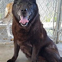Adopt A Pet :: Shelby - Ventura, CA