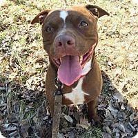 Adopt A Pet :: Neeno - Park Falls, WI