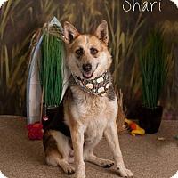 Adopt A Pet :: Shari - Glendale, AZ