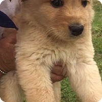 Adopt A Pet :: Buff (ADOPTED) - Trenton, NJ