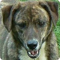 Adopt A Pet :: Brownie - Centerville, TN