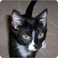 Adopt A Pet :: Piper - Milwaukee, WI
