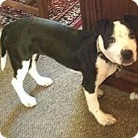 Adopt A Pet :: Skyline - Richmond, VA