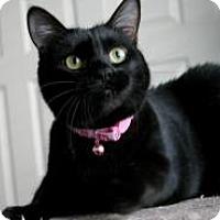 Adopt A Pet :: Faith - Sacramento, CA