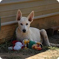 Adopt A Pet :: Stryker - Groton, MA