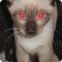Adopt A Pet :: Dalila - Chattanooga, TN