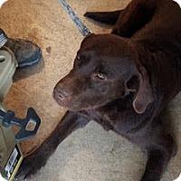 Adopt A Pet :: Buddy #4 - Midlothian, VA