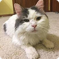 Adopt A Pet :: Henry - St Paul, MN