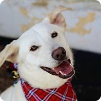 Adopt A Pet :: Orsen - St. Bonifacius, MN