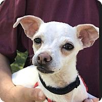 Adopt A Pet :: Ducky - Thousand Oaks, CA