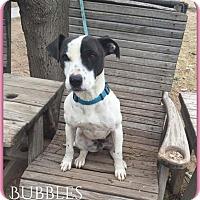 Adopt A Pet :: Bubbles - DeForest, WI