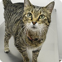 Adopt A Pet :: Matilda - Springfield, IL