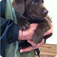Adopt A Pet :: Peanut - Cumming, GA