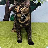 Adopt A Pet :: Sweet Pea - Patterson, NY