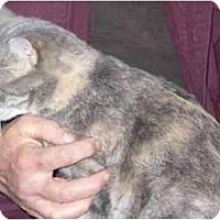 Adopt A Pet :: Fractal - Fayette, MO
