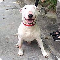 Adopt A Pet :: Louis - Columbia, SC