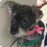 Adopt A Pet :: Kyle - Gainesville, FL