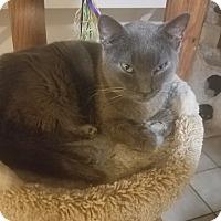 Adopt A Pet :: Smokey - Medford, NY