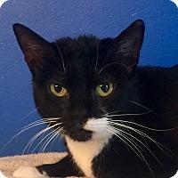 Adopt A Pet :: Diamond - Mount Pleasant, SC