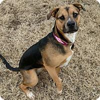 Adopt A Pet :: Carmel - Flower Mound, TX