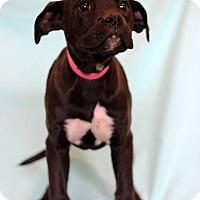Adopt A Pet :: Yvonne - Waldorf, MD