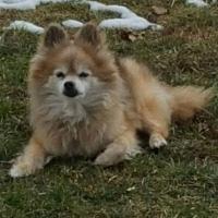 Adopt A Pet :: Cam - Harrisburg, PA