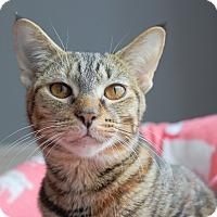 Adopt A Pet :: Seneca - Troy, MI