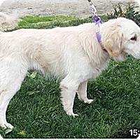 Adopt A Pet :: T4 Valentino - BIRMINGHAM, AL