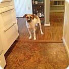 Adopt A Pet :: Chunky