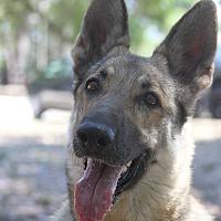 Adopt A Pet :: Argent - Odessa, FL