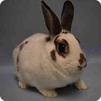Adopt A Pet :: VENICE - Brooklyn, NY