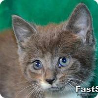 Adopt A Pet :: Harry - Buford, GA