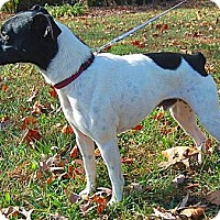 Adopt A Pet :: Jagger - Boise, ID