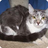 Adopt A Pet :: K-Hannah3-Harper - Colorado Springs, CO