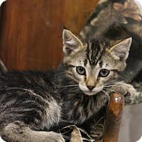 Adopt A Pet :: Eddie - Sacramento, CA