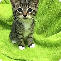 Adopt A Pet :: Buffalo Bill - Trevose, PA