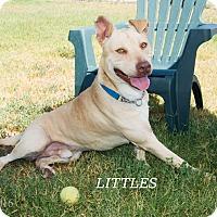Adopt A Pet :: Littles - Patterson, CA