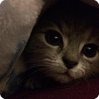 Adopt A Pet :: Bella - Jefferson, NC